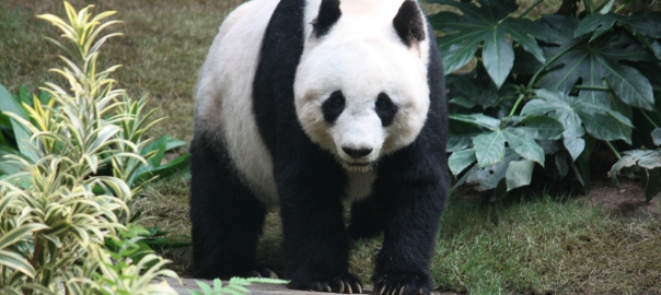 Panda populations and healthcare averages